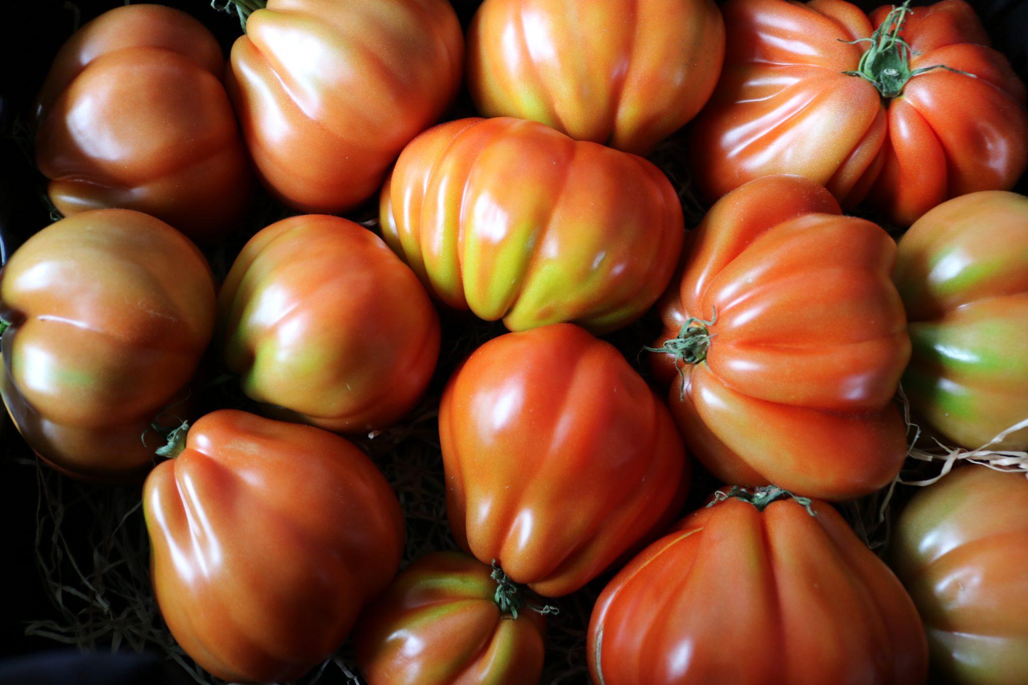 Biolandhof-Füchtorf-Erfahrungen-Gemüse-Anbau-Regional